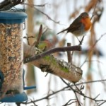 Bird and Feeder