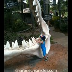 how to swim with the sharks at typhoon lagoon